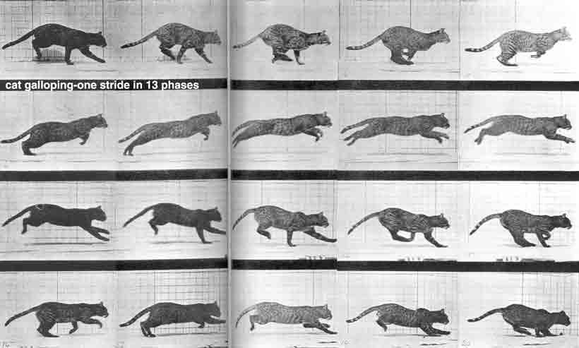 观察一些双足四足动物的行走