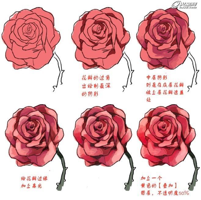 可行的牡丹花画法